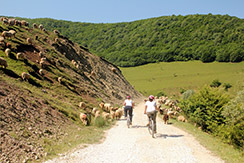 Cycling Tours near Cluj