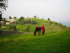 Horse riding in the country side